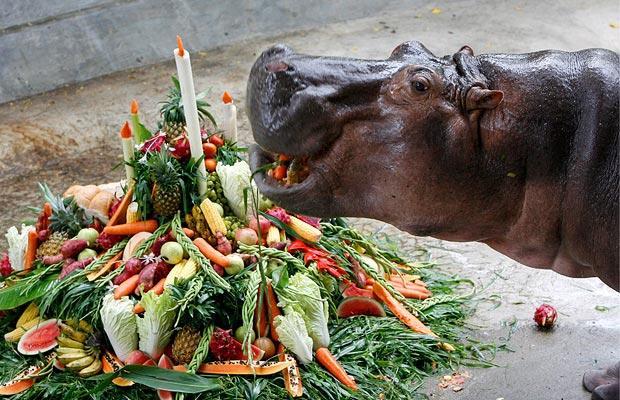 hippopotamus_1013581i.jpg