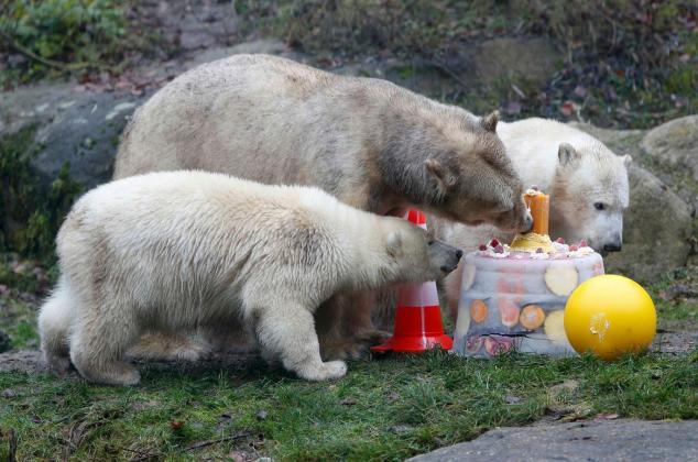 polar-bear-twins.jpg