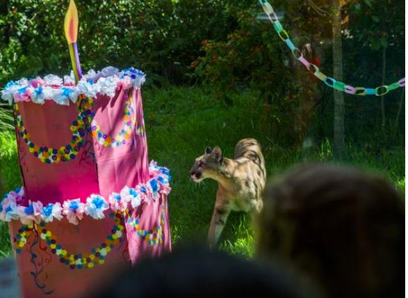 zoo animal birthday